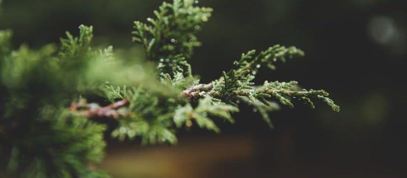 PSR Campania T.I. 8.3.1: 100% a fondo perduto per le aree forestali contro incendi, malattie e desertificazione