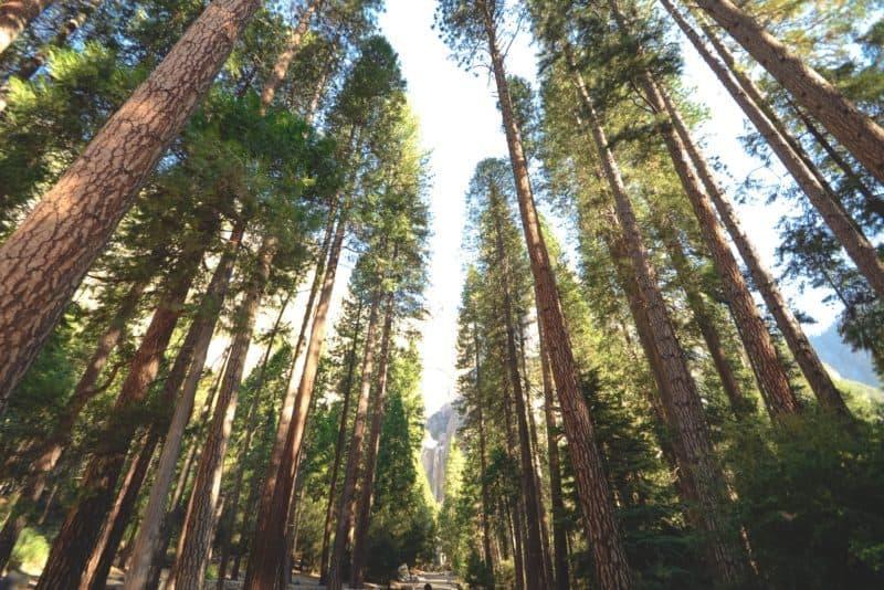 Bando Ambiente 2018: fino a 300.00€ per Aree Naturali Protette