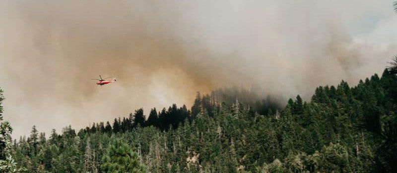 PSR Campania T.I. 8.4.1:  fino al 100% di contributo per il ripristino di foreste incendiate